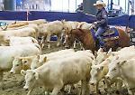 Le immagini della prima giornata del Salone del Cavallo Americano a CremonaFiere