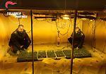 Le immagini dell'avvenieristica fabbrica di marijuana sequestrata nel reggiano