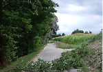 Interventi di emergenza per mettere in sicurezza piante e strade