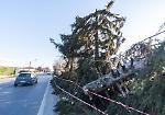 FOTO Vento forte in città, danni e polizia locale mobilitata