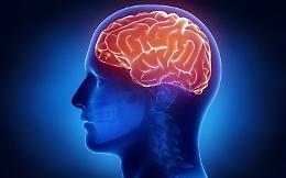 Humanitas, cosi' il cervello si protegge dalle infiammazioni intestinali