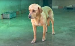 Bobo, Yalco e Charlie: tre nuovi amici da adottare