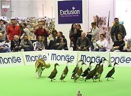 Torna PetsFestival, l'ottava edizione si terrà il 16 e 17 ottobre