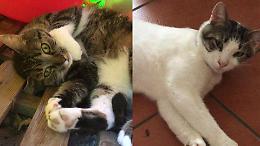 """Allarme gatti abbandonati: """"Fenomeno in crescita"""""""