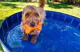 I cani soffrono il caldo, contro il colpo di calore anche capi refrigeranti