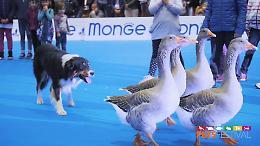 L'amore per gli animali, Petsfestival 2021 da grandi numeri
