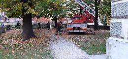 Micino soccorso dai pompieri: era rimasto intrappolato su un albero