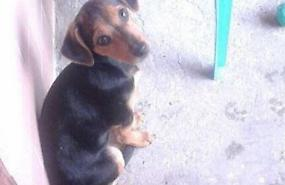 Ladri spaventano due cagnoline, appello per ritrovarle