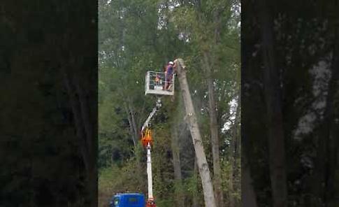 VIDEO Il taglio degli alberi pericolanti in via Passirano a Cavatigozzi