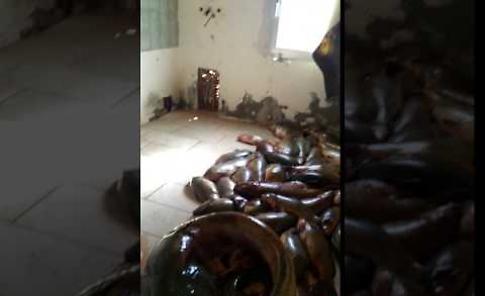 Il video dell'operazione anti bracconaggio ittico