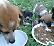 Emergenza abbandoni, salvati sette cuccioli in una settimana